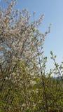 Weißer Baum Lizenzfreie Stockfotos