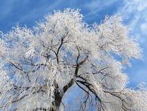 Weißer Baum im Winter, Litauen Lizenzfreie Stockfotos