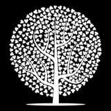 Weißer Baum mit Blättern auf schwarzem Hintergrund Stockfotografie