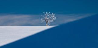 Weißer Baum mitten in Winter Lizenzfreies Stockbild