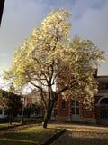 Weißer Baum am Sonnenschein Stockfoto