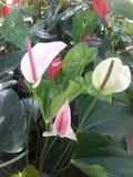 Weißer Blütenschweif stockfotos