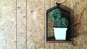 Weißer Blumentopf mit dem grünen Baum, der an der hölzernen Wand hängt Stockbild