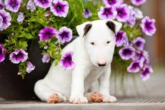 Weißer Bullterrierwelpe mit Blumen Lizenzfreie Stockbilder