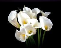 Weißer Calla-Blumenstrauß Stockbilder