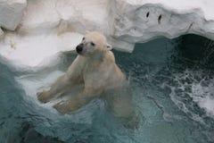 Weißer Eisbär stockbild