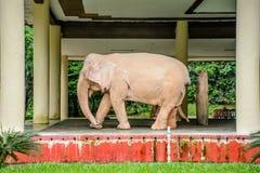 Weißer Elefant in Min Dhama Hill, Rangun, Myanmar Lizenzfreies Stockfoto
