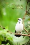 Weißer exotischer Vogel auf einer Niederlassung Lizenzfreies Stockbild