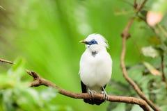 Weißer exotischer Vogel auf einer Niederlassung Stockbilder