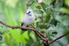 Weißer exotischer Vogel auf einer Niederlassung Stockfoto