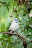 Weißer exotischer Vogel auf einer Niederlassung Stockfotos