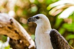 Weißer Falke. Stockbilder