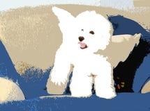 Weißer flaumiger Hund mit Flügeln Stockfoto
