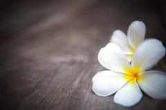 Weißer Frangipani blüht auf brauner hölzerner Beschaffenheit w Lizenzfreie Stockfotografie