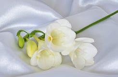 Weißer Freesia auf weißem Satin Stockbild