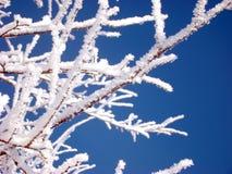 Weißer Frost Stockbild