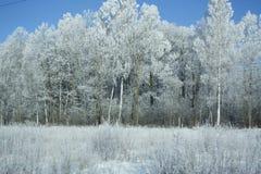 Weißer Frost lizenzfreie stockbilder