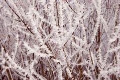 Weißer Frost umfaßte Zweige Lizenzfreie Stockfotos