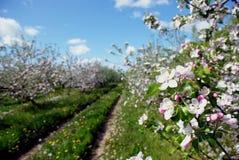 Weißer Garten Stockfotografie