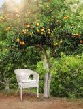 Weißer geflochtener Stuhl unter orange Obstbaum Stockbild