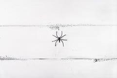 Weißer hölzerner Hintergrund mit Spinne Hintergrund für Halloween Stockbild