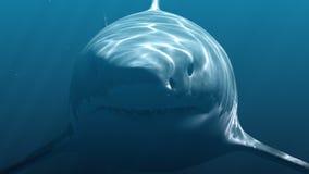 Weißer Hai Megalodon Realistische 3d Animation 4K vektor abbildung