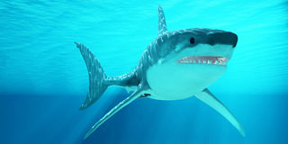 Weißer Hai mit Sonnenstrahlen Stockbild
