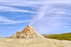 Weißer Hauben-Geysir Stockbilder