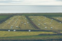 Weißer Hay Rolls auf einem grünen Feld von Island Stockfotografie