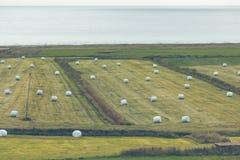 Weißer Hay Rolls auf einem grünen Feld von Island Stockbild