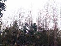 Weißer Himmel Stockbilder