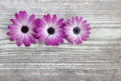 Weißer Hintergrund Blumen auf einem hölzernen Brett Lizenzfreie Stockbilder