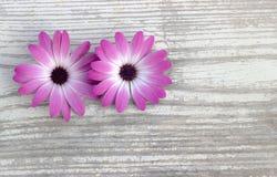Weißer Hintergrund Blumen auf einem hölzernen Brett Stockfotografie
