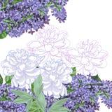 Weißer Hintergrund mit Flieder und Pfingstrosen lizenzfreie abbildung