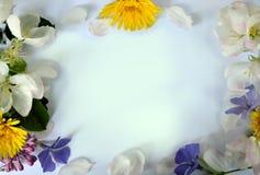 Weißer Hintergrund mit Frühlingsblumen Stockbilder