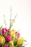 Weißer Hintergrund und Blumen lizenzfreies stockfoto