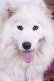 Weißer Hund Lizenzfreie Stockbilder