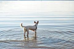 Weißer Hund Lizenzfreie Stockfotos