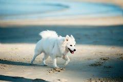 Weißer Hund auf dem Strand stockbilder