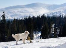 Weißer Hund an den mointains wildnis Lizenzfreie Stockfotografie