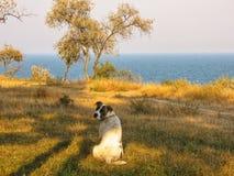 Weißer Hund, der über dem Meer sitzt Stockfoto
