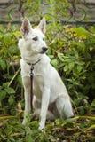Weißer Hund, der auf dem Gras sitzt Stockbilder