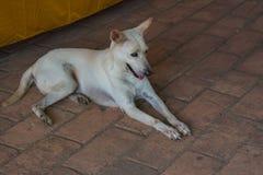 Weißer Hund, der auf dem Treppenhaus sitzt Stockfoto