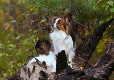 Weißer Hund, der auf einem gebrannten Baum sitzt Das Feuer im Wald Stockfotos