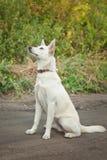 Weißer Hund, der aus den Grund sitzt Lizenzfreie Stockbilder