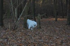 Weißer Hund hinter dem Baum Stockfotos