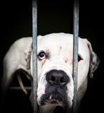 Weißer Hund hinter Sticheleien. Stockfoto