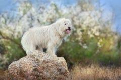 Weißer Hund im Frühjahr stockfoto