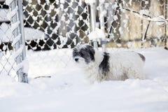 Weißer Hund im Schnee Lizenzfreies Stockfoto