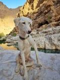 Weißer Hund nannte Snow im Steintal lizenzfreie stockbilder